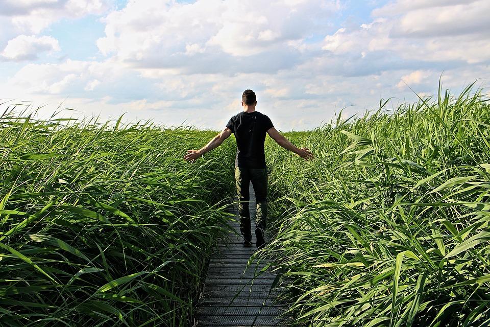 high-grass-1504280_960_720